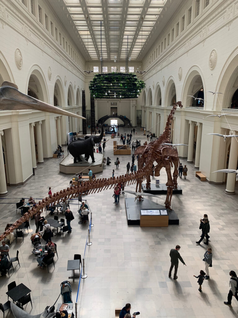 View of a large dinosaur skeleton and visitors at The Field Museum in Chicago