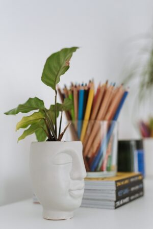 plant in white face shaped pot with container of colored pencils behind it